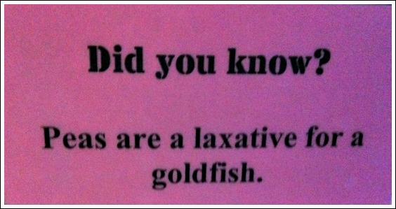 Fish Peas Laxative